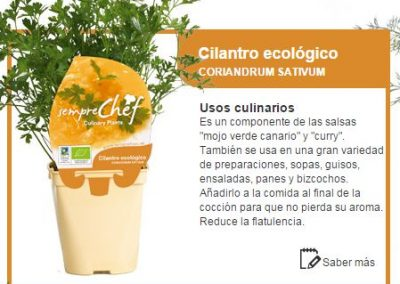 Cilantro ecológico