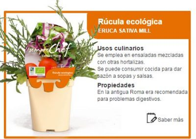Rúcula ecológica