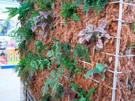 construir jardín vertical plantas de interior 2
