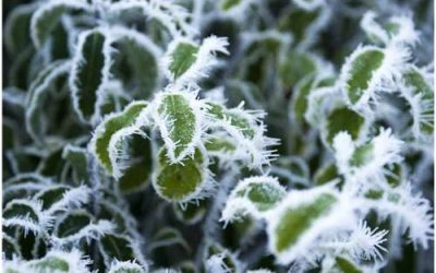 Consejos para cuidar tu jardín en Diciembre