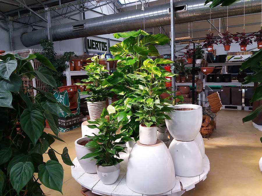 vivero y tienda de plantas