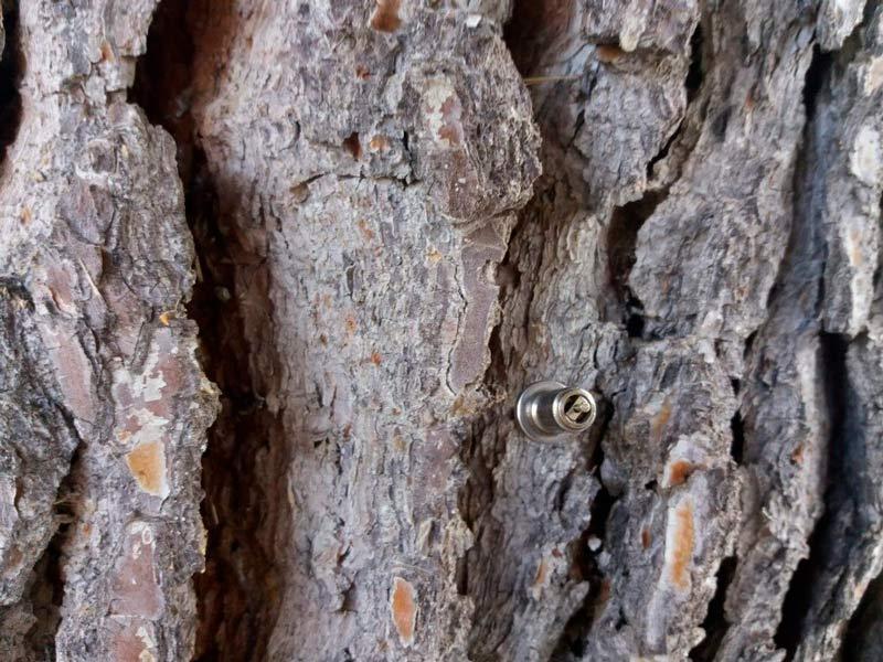 aguja introducida en la planta