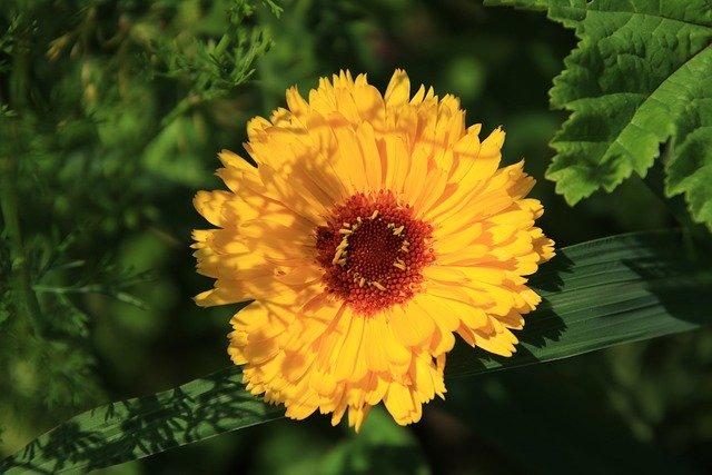 Las mejores flores para verano