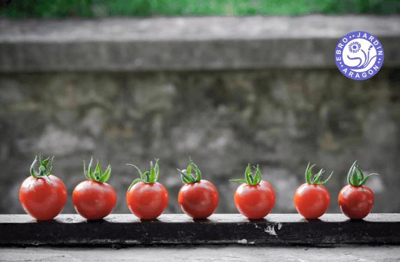 Consejos para cultivar tomates cherry todo el año