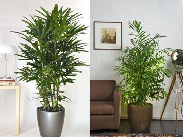 Ideas para decorar tu hogar con plantas de interior